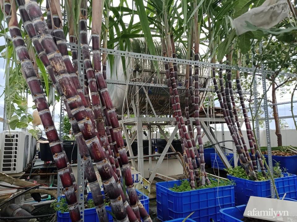 Vườn sân thượng đủ loại từ bầu bí đến nho của bố đảm Sài Gòn giúp gia đình an toàn ở nhà chống dịch