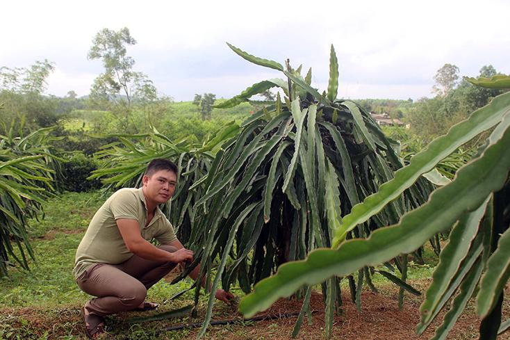 Xã Trường Thủy: Xây dựng vườn mẫu, nâng tầm nông thôn mới