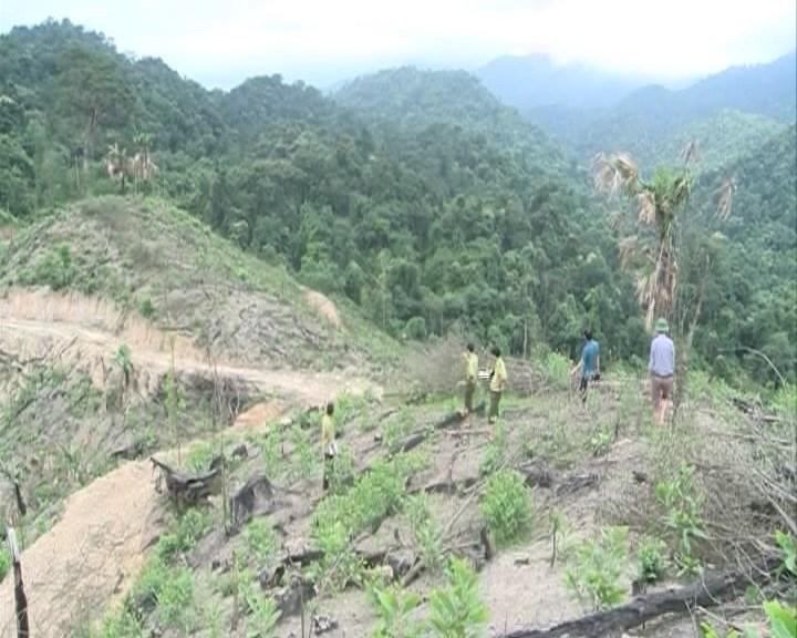 Xác minh nội dung báo chí phản ánh về thực trạng rừng tại xã Kim Thủy