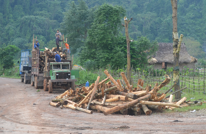 Xuất khẩu được 245.000 tấn dăm gỗ